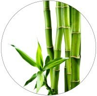 Bambussprossen sind reich an Silicium Kieselsäure zur Unterstützung der Hautpflege von innen